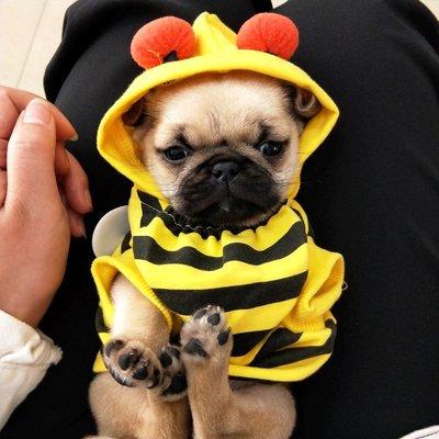 寵物衣服 貓咪狗狗衣服 鞋子 雨衣蜜蜂變身裝 寵物衣服泰迪貴賓比熊博美貓咪小狗狗服飾兩腳衣秋裝