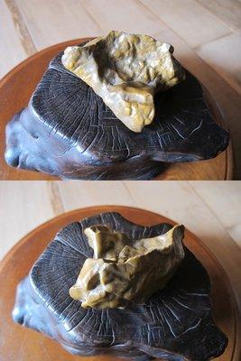 【藏拙】戈壁石(黃)
