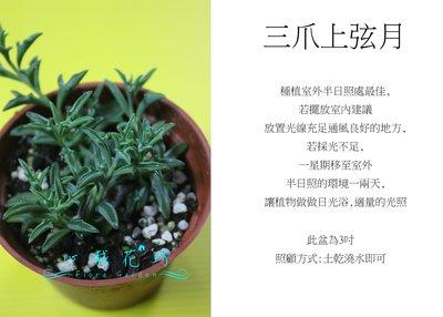 心栽花坊-三爪上弦月/ 小海豚/ 3吋/ 多肉植物/ 售價40特價35 彰化縣
