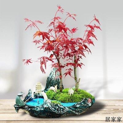 花盆 花器 陶瓷擺飾 陶瓷綠植物組合新款特惠花盆盆景創意迎客松紅楓文竹榕樹大號專用