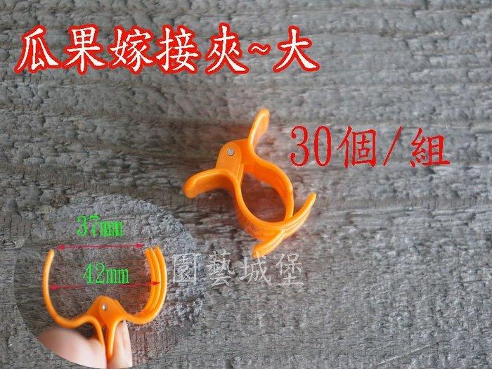 【園藝城堡】嫁接夾 果梗夾 番茄夾 瓜果嫁接夾(大) 固定夾30個/組