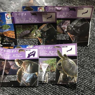 日版 奇譚 kitan nature techni of colour 日本之烏龜 海龜  4種