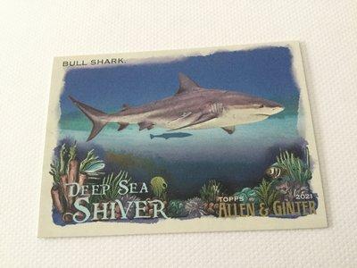 Bull Shark Allen & Ginter deep sea shiver DSS 2