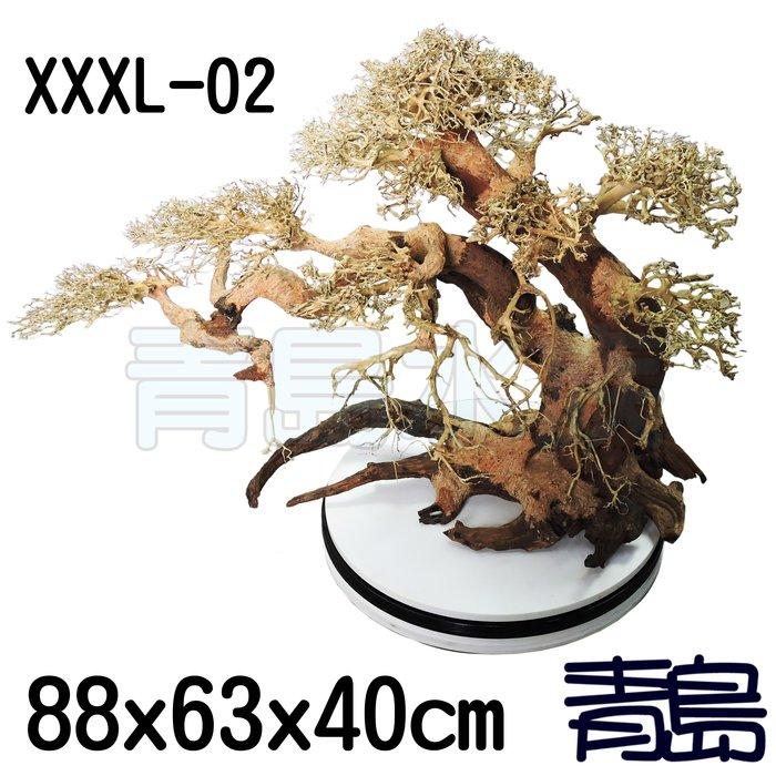 五1↓↓PN。。。青島水族。。。XXXL-02巴西沉木 巴西木 盆景樹 造景 造型神木樹 乾燥樹==88*63*40cm