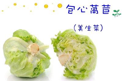 包心萵苣 美生菜 生菜沙拉首選 種子區