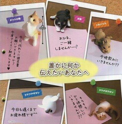 【動漫瘋】 日本 正版 代理 轉蛋 苦苦哀求 欲言又止的可愛動物 全5種  [非 休眠動物園 吼 野生動物 戽斗動物園]