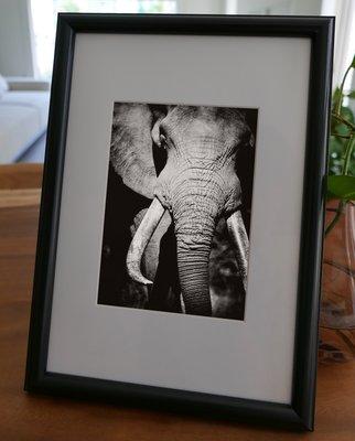 聚鯨Cetacea﹡Art【KLFZ-1778】animal動物 畫框相框