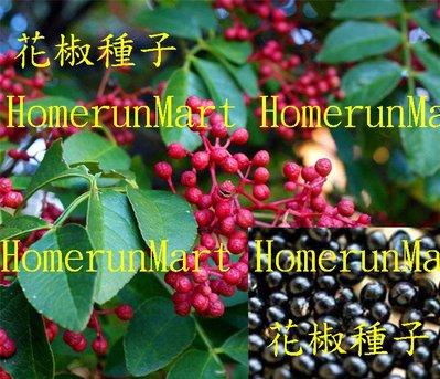 IHB花椒種子500粒大紅袍花椒種子 獅子頭大椒種子 秦椒種子 蜀椒種子 川椒種子 山椒種子 家庭常用增加食欲調味品