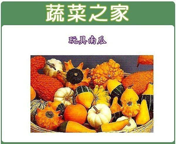 【蔬菜之家】P03.玩具南瓜種子10顆(小玩具.觀賞用.觀賞種子)