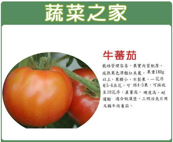 【蔬菜之家】G36.牛番茄種子5顆(日本進口.果肉肥厚.果色鮮紅美麗.風味佳.蔬菜種子)