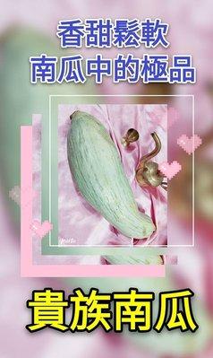 【紅樹林】 貴族南瓜~南瓜中的極品, 甜香鬆軟 (種子)~每份8粒