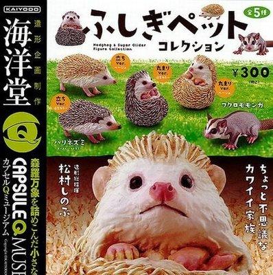 素食天堂~海洋堂 膠囊Q博物館 CAPSULEQ 代理 扭蛋 轉蛋 不思議的寵物收藏集 全5種 現貨 刺蝟 鼯鼠 飛鼠
