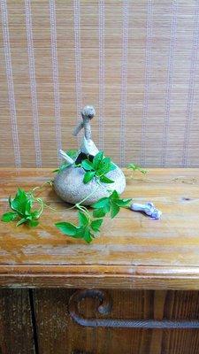 (店舖不續租清倉大拍賣)陶葫瓜,原價3800元特價1900元