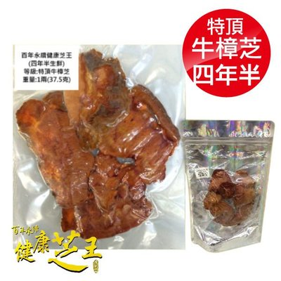 專品藥局 百年永續健康芝王 (四年半) 特頂牛樟芝 生鮮品 37.5g x1兩【2012414】