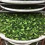 [ 炒茶天師]買1斤送1斤{比賽頭等級} 阿里山頂湖{清香}手採金宣茶葉 $2600/斤 奶香,果香,花香兼俱