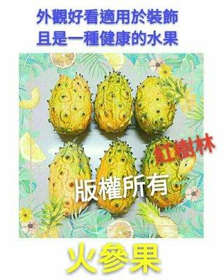 【紅樹林】新興水果樹種~火參果( 刺角瓜 海參果 )~種子每份10顆