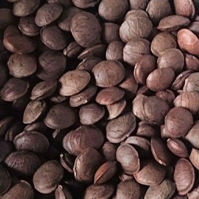 印加果種子(一公斤)