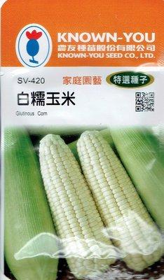 白糯玉米 Glutinous Corn (sv-420) 玉米 【蔬果種子】農友種苗特選種子 每包約20公克