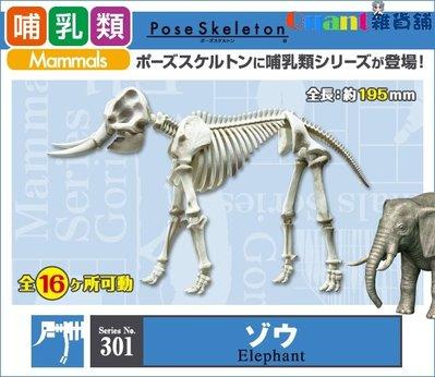 ∮Quant雜貨舖∮┌日本盒玩┐RE-MENT 骷髏 Pose Skeleton 哺乳類 NO.301 大象