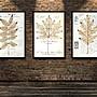 現代裝飾畫科普早教圖手繪植物標本百科圖集...