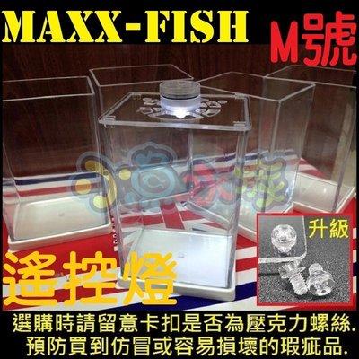 【小魚水族】【M號、遙控燈款】超白缸 壓克力缸 拍照缸 懶人魚缸 鬥魚缸 孔雀缸 小魚缸