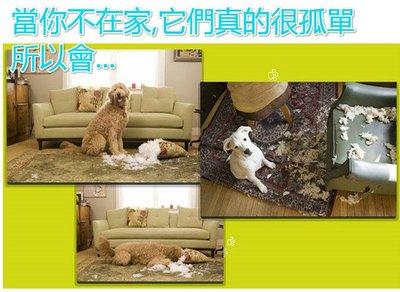 [新上市限量三台大促銷]創意互動寵物玩具美國AFP自動投球機狗玩具(中小型犬) 現貨免運附送狗用球球玩具iFetch
