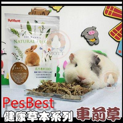 《Life M》【萌寵吃貨】PetBest 100%天然健康草本系列機能性食品-車前草
