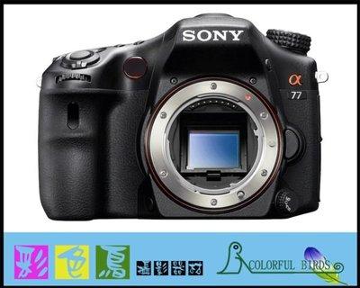 彩色鳥 (單眼相機出租 鏡頭出租) SONY A77 + SONY Zeiss 24mm F2 SSM A77 A99
