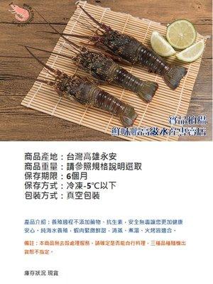 [鮮味蝦高級水產專賣店] 無毒無藥 龍蝦-大300-500g 附SGS檢驗報告 本公司自有無毒純海水農場