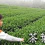 【茶葉館】茶農直營【杉林溪龍鳳峽冬片烏龍...
