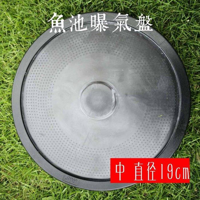 [ 台中水族 ] 台灣-松勝 頂級曝氣盤-中-19CM 特價