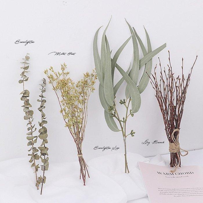 千夢貨鋪-天然植物干花拍照道具綠植攝影道具擺件飾品擺拍裝飾拍攝道具#背景布#拍攝道具#擺件#攝影布#仿真花