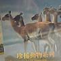 國家地理 全套收藏DVD 珍稀動物系列 RARE SPECIES (編號:5024)
