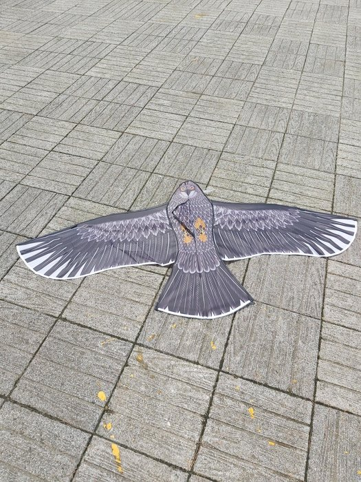 [翔飛戶外休閒] 1.5米老鷹造型風箏-玻璃纖維骨架,尼龍布【直購下標區】