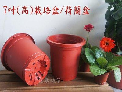 【園藝城堡】7吋栽培盆(高) 荷蘭盆 紅色圓型盆 紅盆 草花用盆 花盆