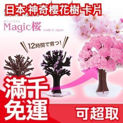 日本製 神奇櫻花樹 會開花 辦公桌 上灑水就能 賞櫻 超療癒 樂天市場銷售第一 桌上型櫻花季 ❤JP Plus+