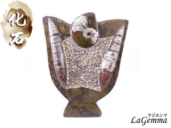 ☆寶峻水晶☆ 鸚鵡螺化石 直角石+斑彩螺化石座 立牌 Orthoceras 奧陶紀 特色禮品 觀賞藝品家飾