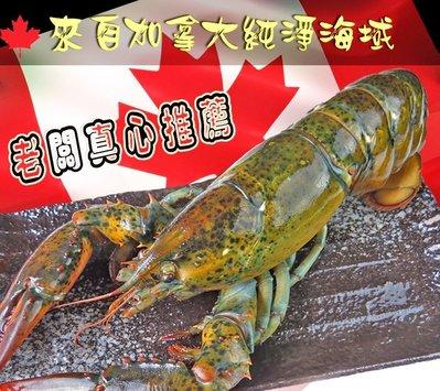 生凍波士頓龍蝦550~600g【鼎鮮市集】鱈魚,鮭魚,鯖魚,鱈場蟹腳,透抽,干貝,龍蝦,甜蝦,草蝦