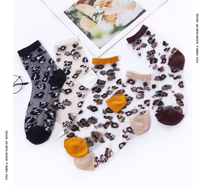 *╮S.water shop╭* 可愛豹紋 水晶襪/玻璃/絲襪/堆堆襪 FN#00278-01 共5色 (現貨)