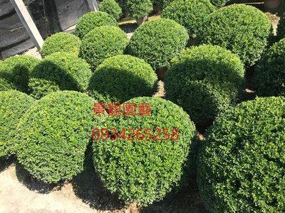 細葉球型七里香(球徑約50cm),波波草,波波球