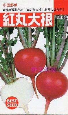 【野菜部屋~蔬菜種子】I21 日本紅丸大根種子1.1公克(約75粒) , 好彩頭 , 肉質細密 , 每包12元~