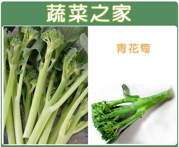 【蔬菜之家】B07.青花筍種子12顆(日本進口元氣品種.口感似青花椰菜.花朵較小.較脆較鮮甜.蔬菜種子)