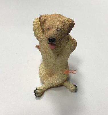 ANIMAL LIFE 狗瑜珈大師 黃金獵犬 隱藏版 朝隈俊男