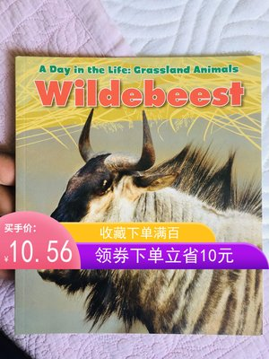非洲牛羚 Wildebeest (A Day in the Life: Grassland Animals)