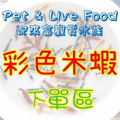 【彩色米蝦】綜合下單區~Pet & Live Food【配來富觀賞水族】