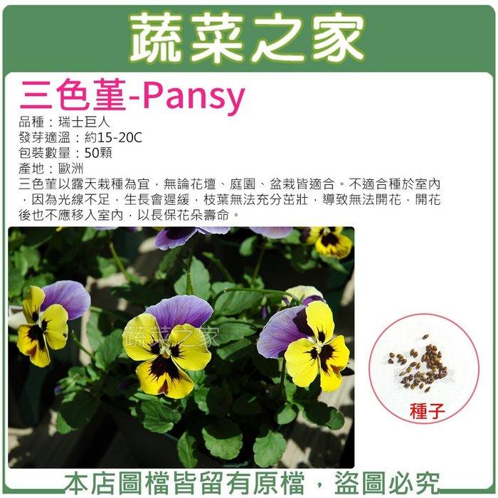 【蔬菜之家】H46.三色堇種子50顆(無論花壇、庭園、盆栽皆適合。不適合種於室內.花卉種子)
