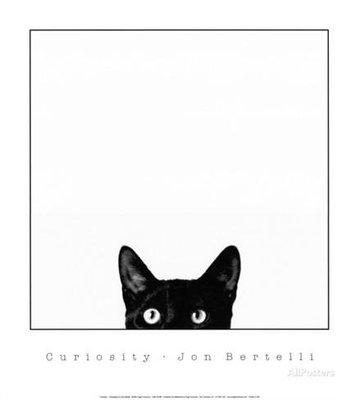 Curiosity 好奇的喵星人 貓 動物攝影 美國原版 旁白海報裝飾畫