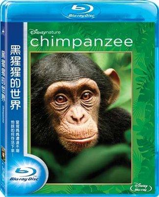 合友唱片 面交 自取 黑猩猩的世界 藍光 Chimpanzee BD 限時特價~09/30