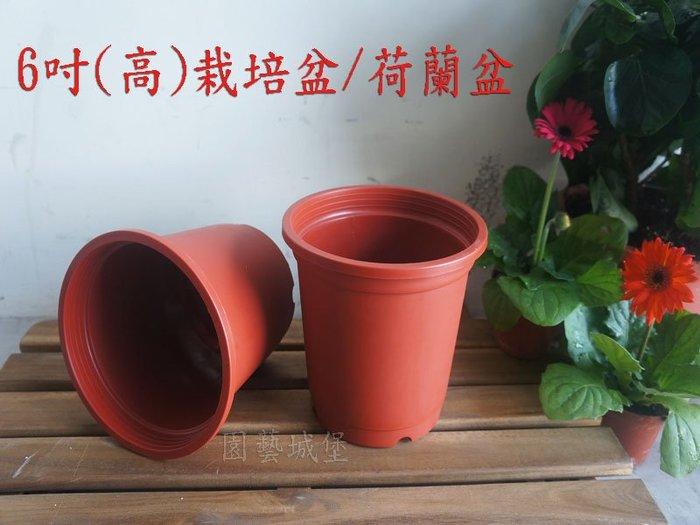 【園藝城堡】6吋栽培盆(高) 荷蘭盆 紅色圓型盆 紅盆 草花用盆 花盆