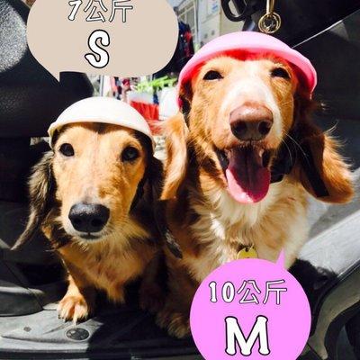 熱銷 寵物安全帽 兜風必備 寵物 安全帽 機車 外出 帽子【CH-05A-50006】
